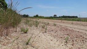 显露国家土路的照相机幻灯片在农村农田旁边 股票录像