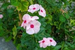 显露自然秀丽的五颜六色的植物 库存图片