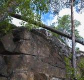 晃动与一棵下落的树和生长杉木 库存照片