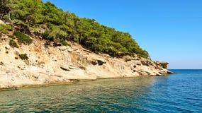 晃动与在地中海的岸的树 免版税库存照片