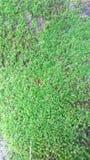 晃动在地面和生苔原因天气 库存照片
