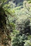 晃动白色 另一个名字是老鹰岩石 克拉斯诺达尔地区 绝对垂直的峭壁,盖用轻的石灰石和 图库摄影