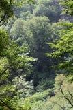 晃动白色 另一个名字是老鹰岩石 克拉斯诺达尔地区 绝对垂直的峭壁,盖用轻的石灰石和 库存图片