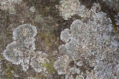 晃动纹理,背景,与青苔的自然岩石 免版税库存照片