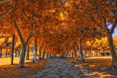 晃动道路在金黄树下在公园 蓝色多云秋天域横向偏僻的天空结构树黄色 图库摄影