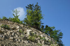 晃动结构树 库存图片