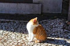 晒日光浴在被修补的地面的猫 图库摄影