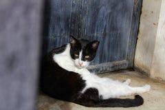 晒日光浴在被修补的地面的猫 免版税库存照片