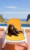 晒日光浴的小狗 库存照片