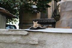 晒日光浴的猫睡觉在屋顶,取暖在阳光下和 免版税库存图片