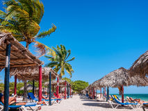 晒日光浴在棕榈树和遮阳伞下在Playa肘在加勒比 库存图片