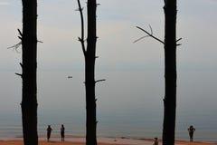 晒日光浴在海滩的人们在杉树附近 库存图片