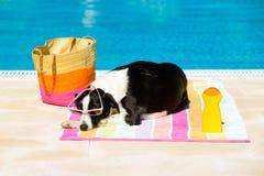 晒日光浴在游泳池边的狗 免版税图库摄影