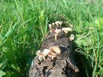 晒日光浴在领域的蘑菇家庭  免版税库存照片