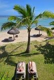 晒日光浴在sundeck椅子的夫妇在棕榈树树荫下在Le Morne靠岸,毛里求斯 免版税图库摄影
