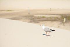 晒日光浴小的鸟 免版税库存图片