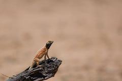 晒日光浴树的蜥蜴 免版税库存照片