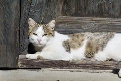 晒日光浴白色的猫坐在门前面和 库存照片