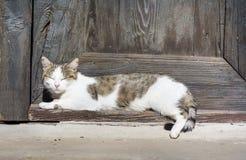 晒日光浴白色的猫睡觉在门前面和 免版税库存图片