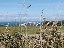 晒衣架在阳光下和在象草的地面的风上 免版税库存图片