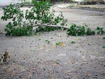 晒黑在风暴以后的树枝 库存图片