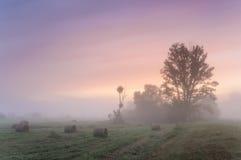破晓在有树和秸杆块的一个有薄雾的草甸 库存图片