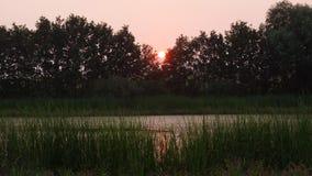 晚上一个小池塘和树剪影、落日和它的反射的夏天视图在水,对称backhground中 库存图片
