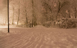 晚上公园冬天 库存照片