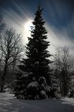 晚上冬天 库存照片