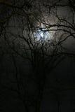 晚上冬天 图库摄影