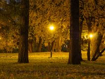 晚上在公园 在街灯的烧伤明亮的电灯泡 免版税图库摄影