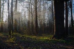晚上在森林里 免版税库存图片