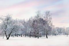 晚上在积雪的冬天森林里 库存图片