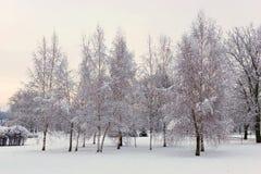 晚上在积雪的冬天森林里 免版税库存照片