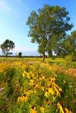 晚上大草原在伊利诺伊 免版税库存照片