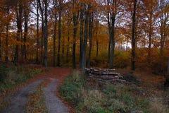 晚上心情在日落的森林里 免版税库存图片