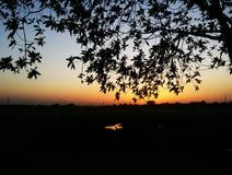 晚上日落和树 免版税库存照片