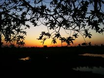 晚上日落和树 库存图片