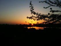 晚上日落和树 免版税图库摄影