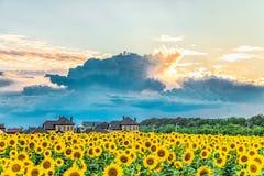 晚上日落和黑暗的雨云在一个开花的向日葵领域和suburbian家 免版税库存照片