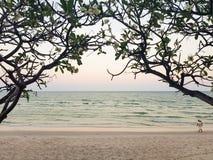 晚上日落淡色seaview和白色沙滩通过美丽的剪影羽毛或赤素馨花花树曲拱 免版税图库摄影