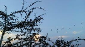 晚上时间儿子日落鸟 库存图片
