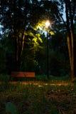 晚上时间的公园 库存照片