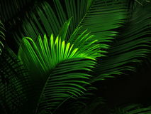 晚上棕榈树视图 免版税图库摄影