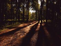 晚上森林 库存照片