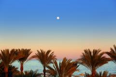 晚上海和月亮在棕榈树 库存图片