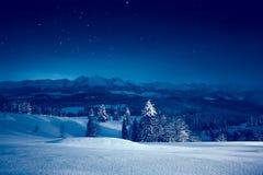 晚上满天星斗的冬天 免版税库存图片
