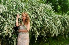 晚上燕尾服的女孩在春天在中部在开花的灌木和树美好微笑中 库存图片