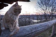晚上猫 免版税库存图片
