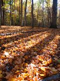 晚上秋天风景伊利诺伊 库存图片